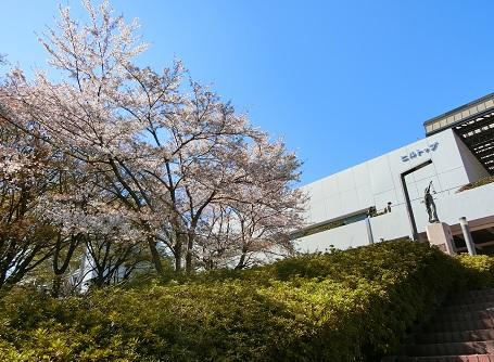 20190413sakura2.jpg