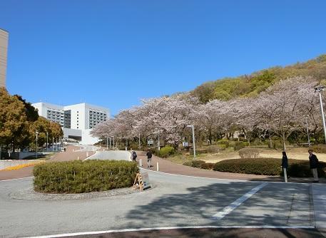 20190413sakura6.jpg